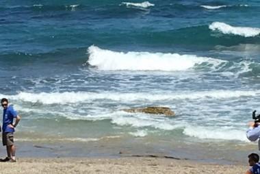 """Der """"Aufhänger"""": Gesundgepflegte Schildkröte am Weg zurück ins Meer"""